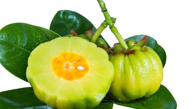 Garcinia Cambogia extract - a very powerful fat burner